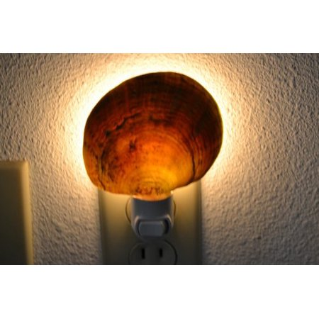 Natural Raw Mother of Pearl Clam Sea Shell Night Light Bathroom Kitchen, Real Sea Shell Night Light By MyGANN