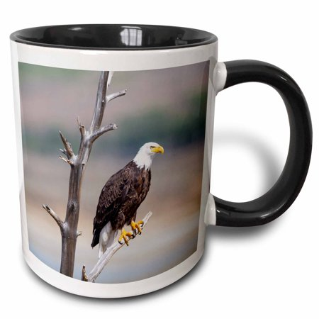 3dRose Wyoming, Bald Eagle roosting on snag. - Two Tone Black Mug, 11-ounce