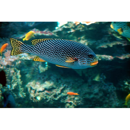Framed Art For Your Wall Fish Colorful Tropical Underwater Aquarium 10x13 Frame