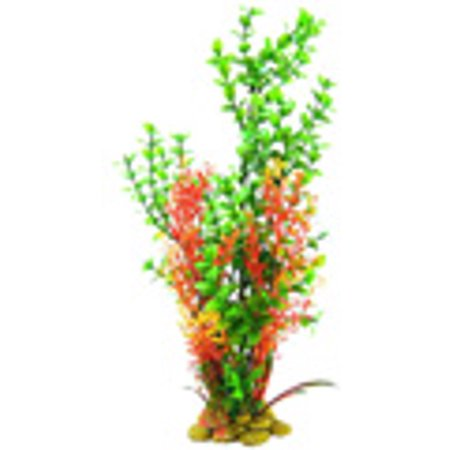 Aquatic Creations Green Bacopa Plant 15\