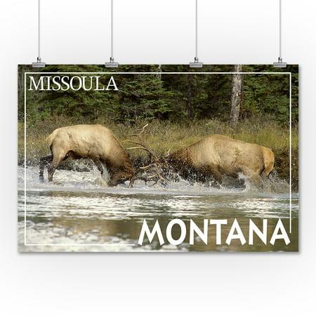 Missoula Montana Elk Bulls Fighting Lantern Press Photography James T Jones 36x54