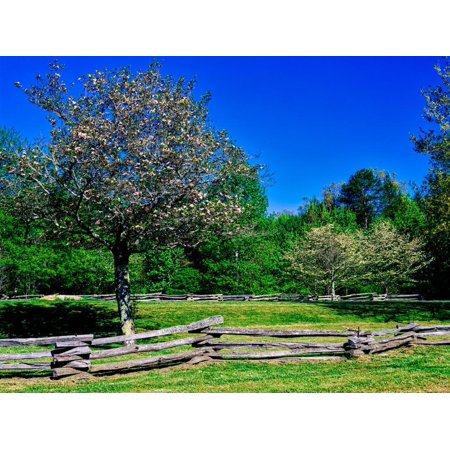 Blossom trees in farm, Davidson River Campground, Pisgah National Forest, Brevard, North Carolin... Print Wall Art - National Forest Adventure Farm Halloween