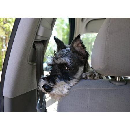 LAMINATED POSTER Pets Puppy Animals Animal Dog Man's Best Friend Poster Print 24 x 36 ()