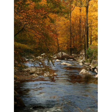 Golden foliage reflected in mountain creek, Smoky Mountain National Park, Tennessee, USA Fall Photo Print Wall Art By Anna