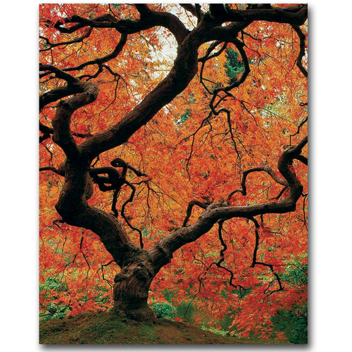 "Trademark Art ""Japanese Tree I"" Canvas Wall Art by David Farley"