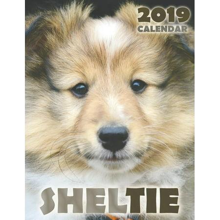 Sheltie 2019 Calendar (Paperback)