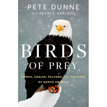 Birds of Prey : Hawks, Eagles, Falcons, and Vultures of North America (Hardcover)