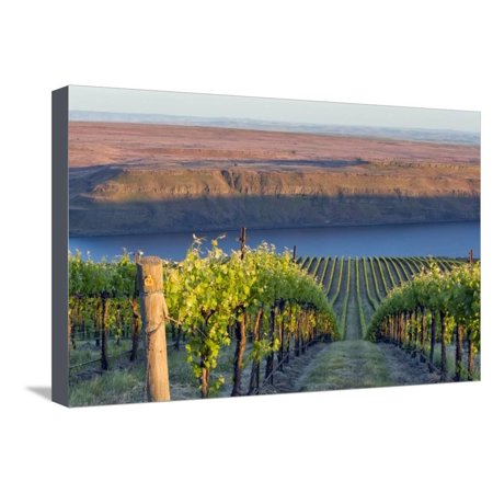 USA, Washington. the Benches Vineyard in the Horse Heaven Hills Ava Stretched Canvas Print Wall Art By Janis Miglavs