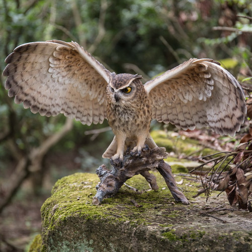 Hi-Line Gift Ltd. Eagle Owl On Branch with Open Wings Statue