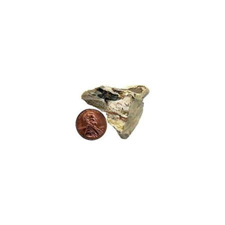 Petrified Wood Gem (Petrified Wood - Bulk Mineral By GeoCentral )