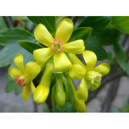Framed Art For Your Wall Bush Flower Yellow Sunshine Shrub Spring 10x13 Frame
