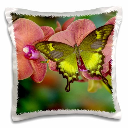 3dRose Green Swallowtail Butterfly - Pillow Case, 16 by 16-inch ()