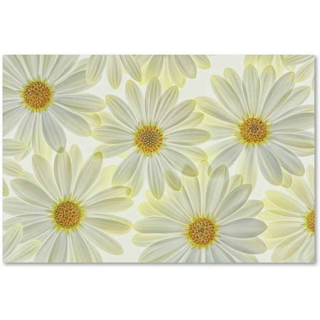 Trademark Fine Art 'Daisy Flowers' Canvas Art by Cora Niele