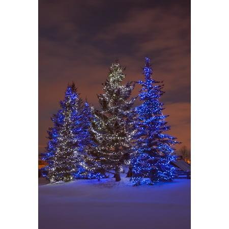 Calgary Alberta Canada Christmas Lights On Evergreen Trees At Sunset Canvas Art - Michael Interisano  Design Pics (24 x 38) ()