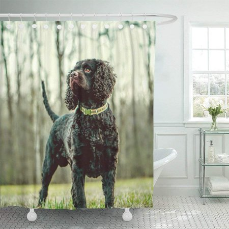 WOPOP Aws American Water Spaniel Best Dog Dogs Field Friend Grass Hunting Shower Curtain 66x72