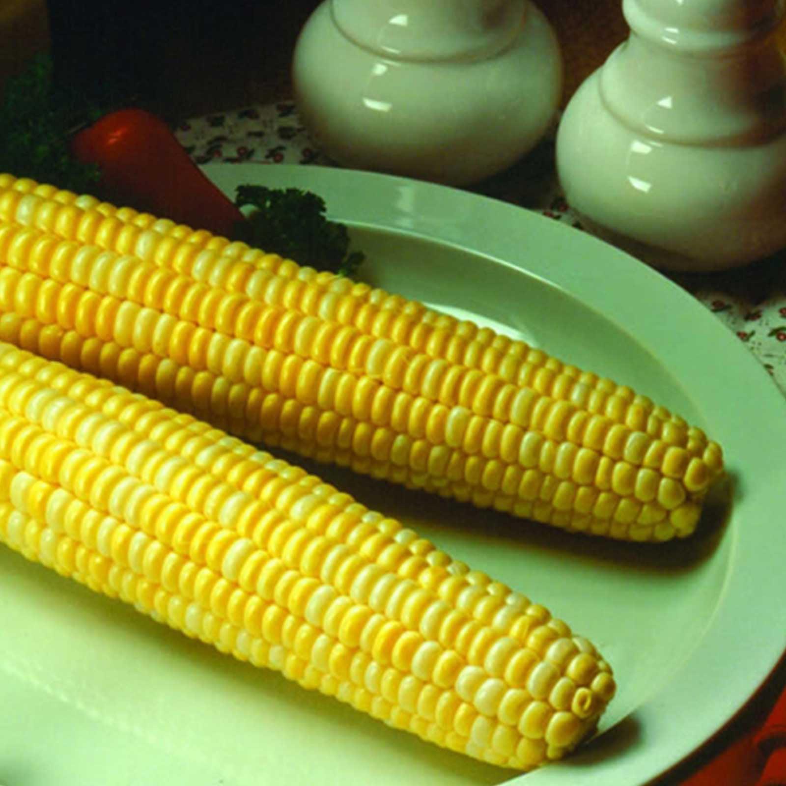 Image of Honey & Cream Hybrid Corn Garden Seeds (Treated) - 1 Lb - Non-GMO, Sugary Enhanced, Yellow & White Sweet Corn - Vegetetable Gardening