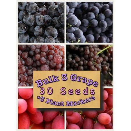 Bulk 3 Grape Vine Seeds Bunch, Concord 30 Seeds + 3 Plant Markers