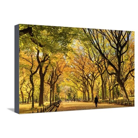 Orange Park Mall Halloween (Usa, New York City, Manhattan, Central Park, the Mall Stretched Canvas Print Wall Art By Michele)