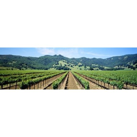 Napa Valley Vineyards Hopland CA Poster Print - Halloween Store Napa Ca