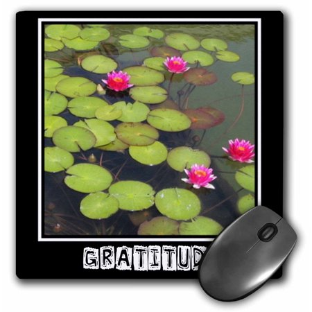 Lily Pad Arduino (3dRose Zen Gratitude Lily Pads and Lotus Flowers Spirituality Motivational, Mouse Pad, 8 by 8)