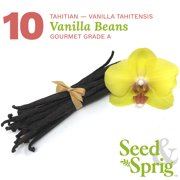 Seed & Sprig Tahitian Vanilla Beans | 10 Pack | Bulk Whole Vanilla Pods & Seeds | Baking, Extract, Brewing, Cooking | Gourmet Grade A | 5.5+ inches Non-GMO Long, Plump, Moist