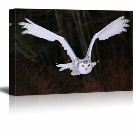 Canvas Prints Wall Art - A Flying Snowy Owl Animal/Bird Photograph | Modern Wall Decor/Home Decoration Stretched Gallery Canvas Wrap Giclee Print & Ready to Hang - 24