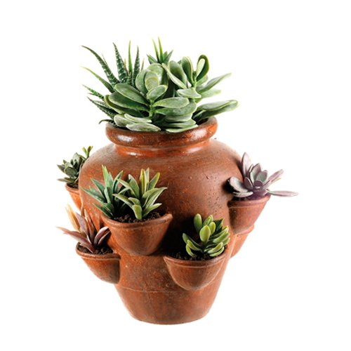 Tori Home Cactus Garden Desk Top Succulent Plant in Planter