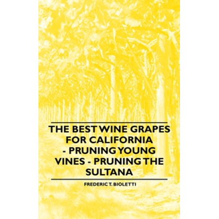 The Best Wine Grapes for California - Pruning Young Vines - Pruning the Sultana -