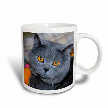 3dRose British Short Hair cat, Ceramic Mug,