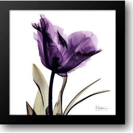 (X-ray Royal Purple Parrot Tulip 16x16 Framed Art Print by Koetsier, Albert)