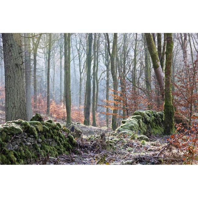 Dumfries, Scotland - A Forest with Frost On The Ground Poster Print, 19 x 12 - image 1 de 1