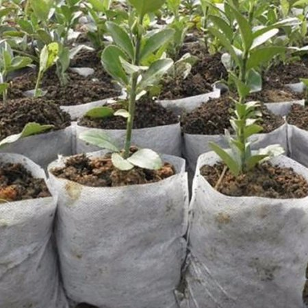 Plant Fiber Biodegradable Nursery Pots Seedling-Raising Bags Plants Pouch Home Garden Supply(14x16cm /20x22cm) (Garden Nursery)