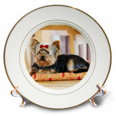 3dRose Yorkie. Yorkshire Terrier. Cute puppy with red bow. Playful dog. - Porcelain Plate, 8-inch