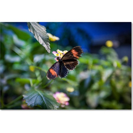 "Trademark Fine Art ""Black and Orange Butterfly"" Canvas Art by Yale Gurney"