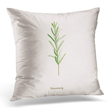 CMFUN Colorful Appetizing Handpainted Watercolor with Rosemary in Vintage Style Green Artistic Pillows case 20x20 Inches Home Decor Sofa Cushion Cover ()