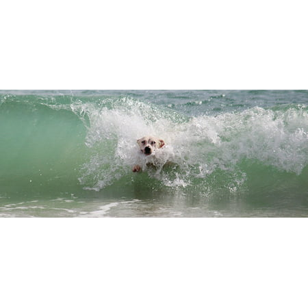 M&m Play Equipment (LAMINATED POSTER Dog Animal World Water Wet Play Beach Wave Surf Poster Print 24 x 36 )