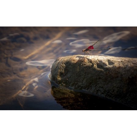 Laminated Poster Bug Insect Nature Red Fly Summer Wing Dragonfly Poster Print 24 x 36