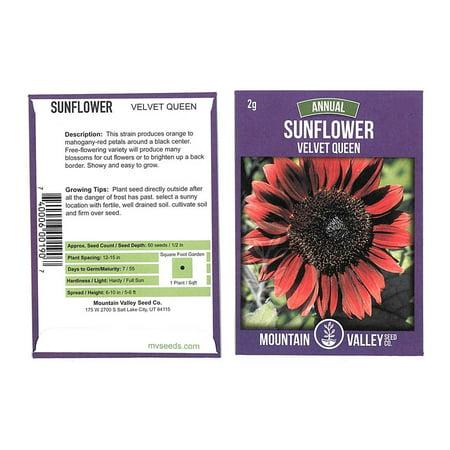Sunflower Flower Garden Seeds - Velvet Queen - 2 g Packet - Annual Wildflower Gardening Seeds - Mountain Valley Seeds