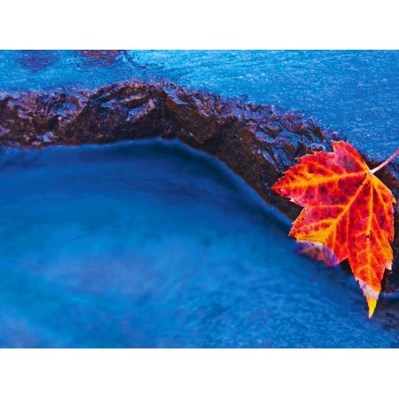 Red Maple Leaf on Edge of Rock in Chikinishing River, Killarney Provincial Park, Ontario, Canada Print Wall Art By Mike Grandmaison ()