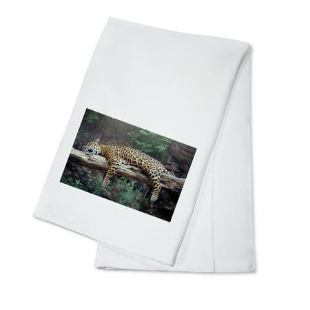 Cheetah Sleeping in Tree - Lantern Press Photography (100% Cotton Kitchen Towel) ()