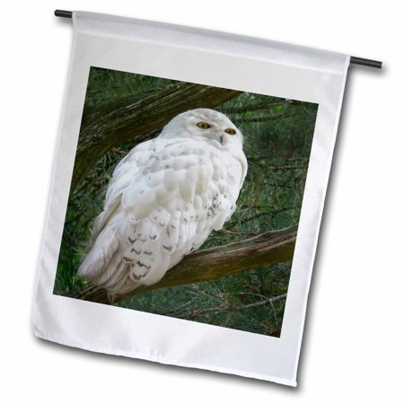 Rise Against Flag - 3dRose Snow white owl perched on a branch against a green background, Garden Flag, 12 by 18-Inch