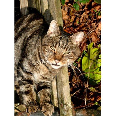 LAMINATED POSTER Feline Domestic Kitty Kitten Animal Cat Pet Poster Print 24 x 36