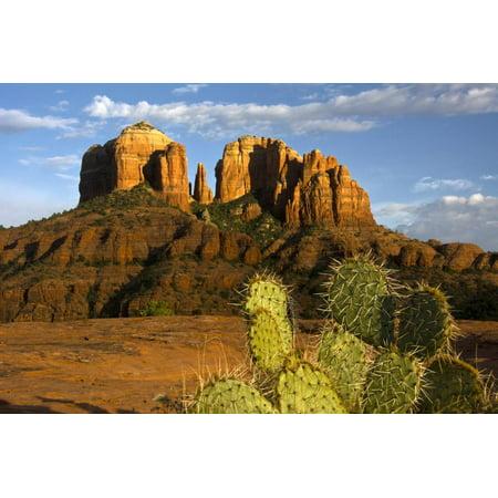 Sunset Sedona Arizona (Cathedral Rock at Sunset, Prickly Pear Cactus, Sedona, Arizona, Usa Print Wall Art By Michel Hersen)