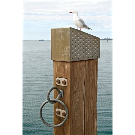 LAMINATED POSTER Sea Port Wooden Seagull Boat Ring Tie Seaside Poster Print 24 x 36