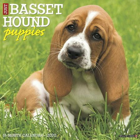Just Basset Hound Puppies 2020 Wall Calendar (Dog Breed Calendar) (Other)