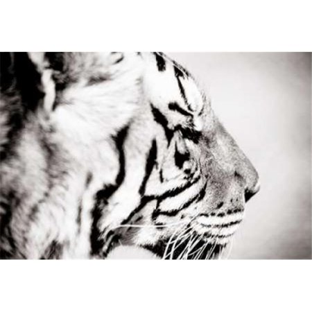 Gango Editions PDXPSWLD344SMALL Tiger Poster Print by Beth Wold, 12 x 18 - Small - image 1 of 1