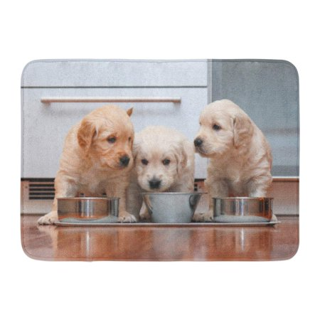 GODPOK Dog Blue Puppy Puppies Eating Food in The Like Little Gourmets Brown Bowl Adorable Rug Doormat Bath Mat 23.6x15.7 (Gourmet Frozen Food Delivered To Your Door)
