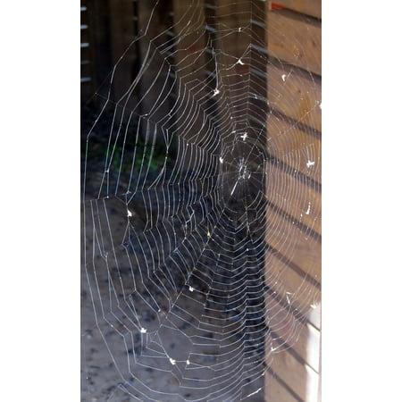 LAMINATED POSTER Thread Spider Web Spider Spiderweb Arachnid Web Poster Print 11 x 17