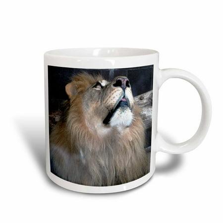 Food Lion Store Mug