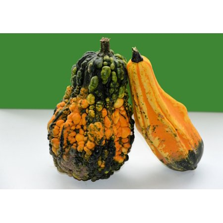 LAMINATED POSTER Autumn Gourd Ornamental Decoration Fruit Fall Poster Print 24 x -
